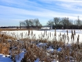Pond 1 - January 2017