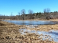 Pond 3 - Spring