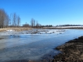 Pond 4 - Spring