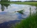 Pond 2 - Summer
