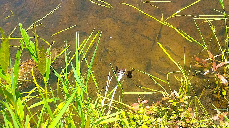 Click to View Oakleigh Wetland Restoration Photos