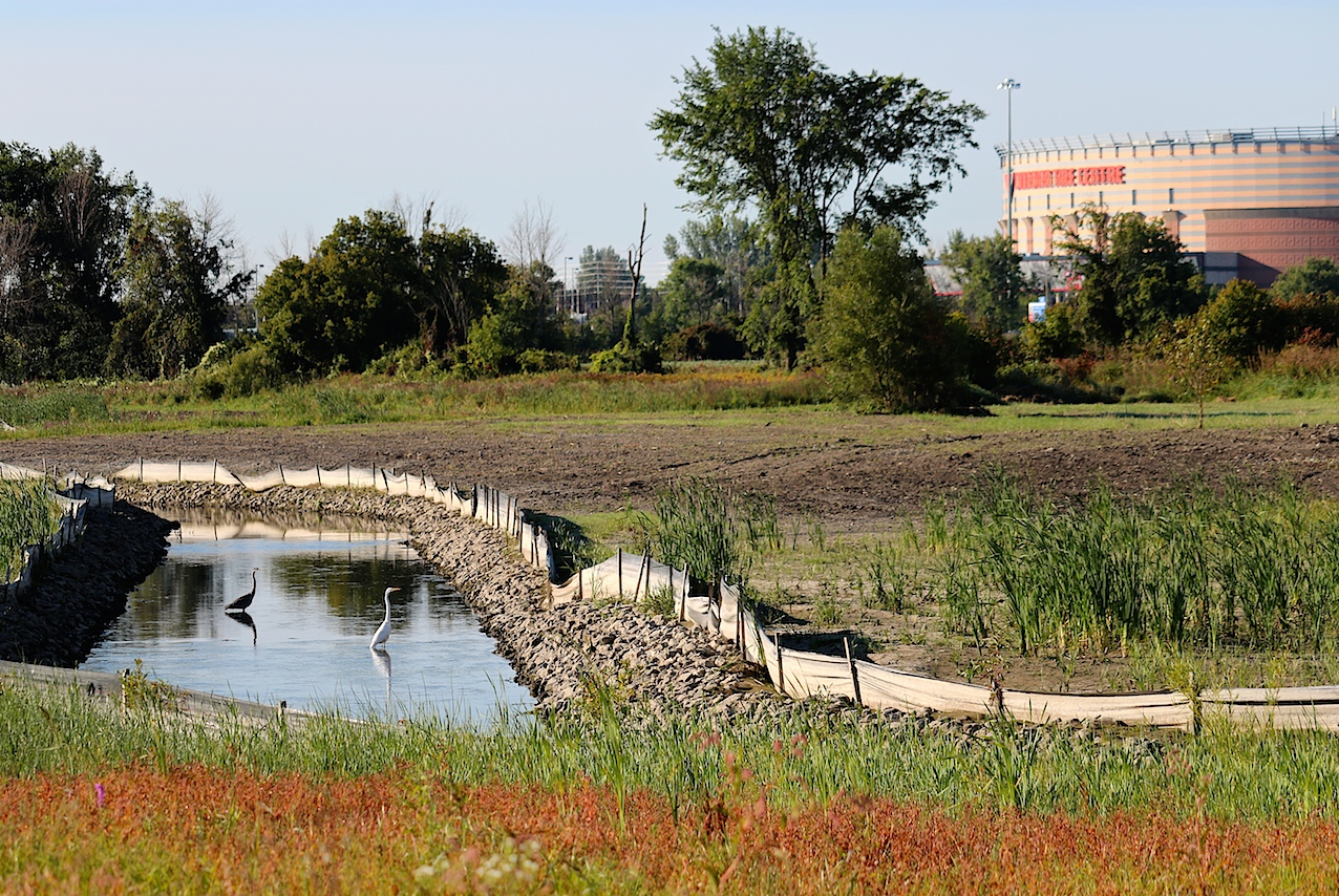 Carp River Restoration at Terry Fox Dr